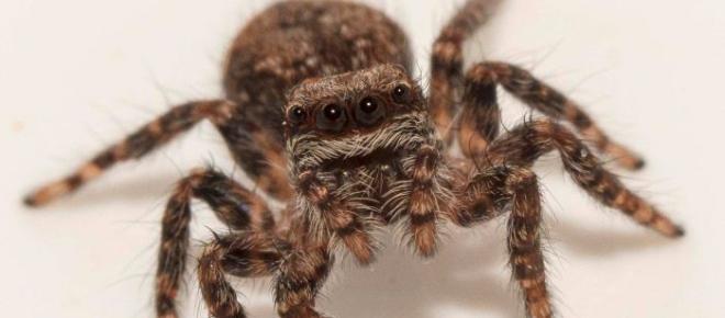 Las arañas son impotentes ante las vibraciones de los 4WD