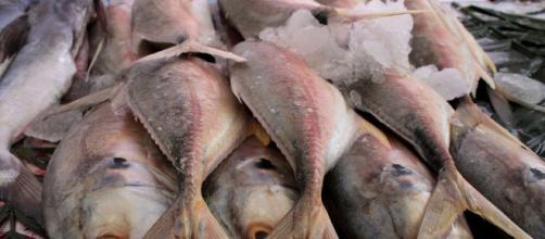 Comer pescado, bueno para la salud - com.mx