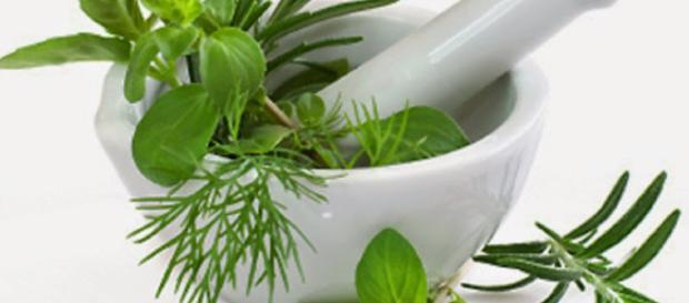 7 Maravillosas Plantas Medicinales para controlar la Diabetes de ... - blogspot.com