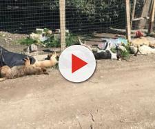 Indignazione in tutta Italia per la mattanza di cani randagi a Sciacca [fonte: Alfio Romeo - Facebook]