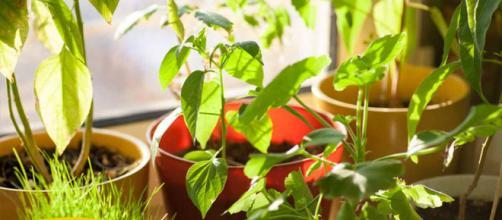 12 Plantas Domésticas Que Mejoran Calidad del Aire Interior - mercola.com