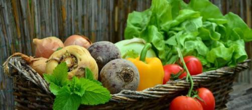 Alimentación Ecológica: La agricultura orgánica puede alimentar.