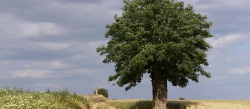 Arbol solitario Imagen & Foto | naturaleza diversa , sevilla ... - fotocommunity.es