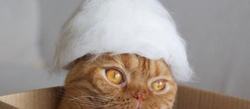 Gatos en sombreros hechos de su propio cabello es una nueva tendencia de la moda de mascotas