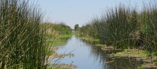 Las aguas residuales de algunas ciudades puede utilizarse.