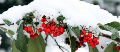 Las plantas que mejor resisten el frío.