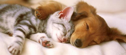 Pets can cause life threatening diseases. [Image Credit: Kitty.green66 / Flickr]