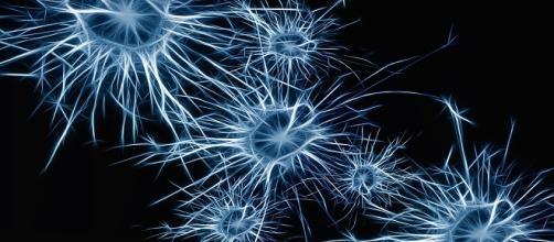Aspecto gráfico de una neurona. Public Domain.