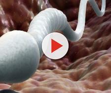 Fertilità maschile: i rischi per il concepimento