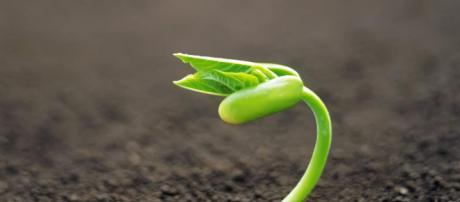 Las plantas son indispensables en la vida del ser humano.
