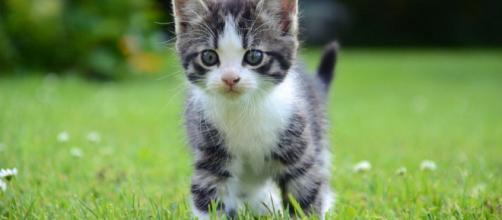 Calendario de vacunas del gato | Mascotas - facilisimo.com
