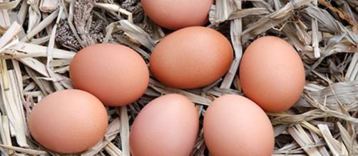 Huevos para casa, ¿qué gallina compro?