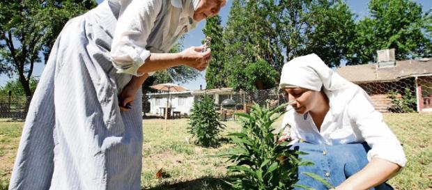 Marihuana. 'Dealers' se visten de monjas - com.mx