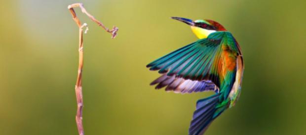 Se conocen más de 204 especies de aves donde su habitad natural están relacionados a sembradíos de café.