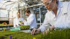 El origen de las plantas parece ser más longevo de lo que creían los científicos