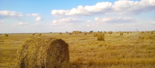 Agricultura de subsistencia son las palabras correctas.
