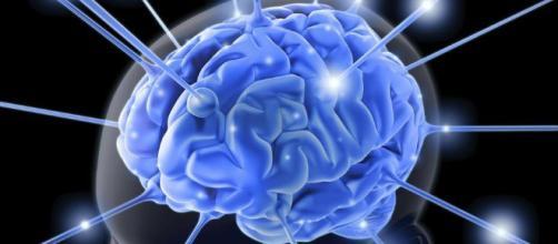 alimentos saludables para nutrir tu cerebro - clarin.com
