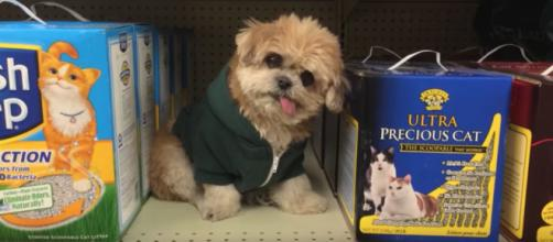 Marnie spending time on the shelf at PetSmart. - [image credit: Marnie the dog / YouTube screencap]