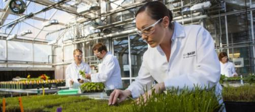 Sitio de invernadero de BASF en soluciones agrícolas en Research Triangle Park, América del Norte.