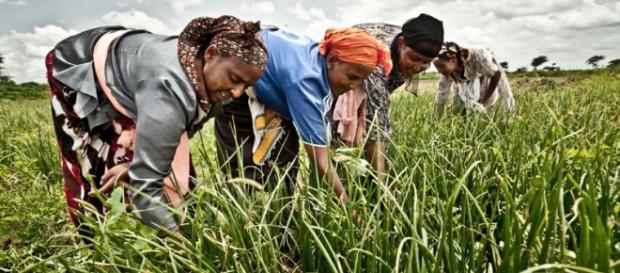 Las mujeres son indispensables en las practicas agrícolas.