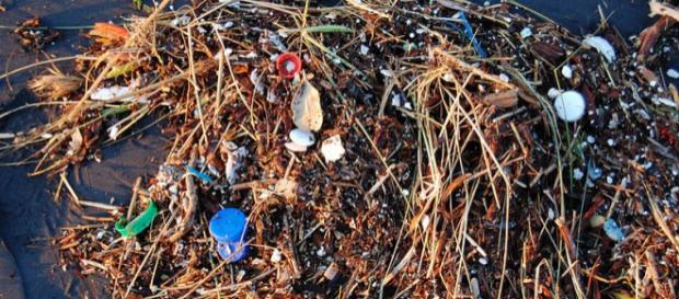 Pieces of plastic on a beach in San Francisco. - [Image credit – Kevin Krejci, Wikimedia Commons]