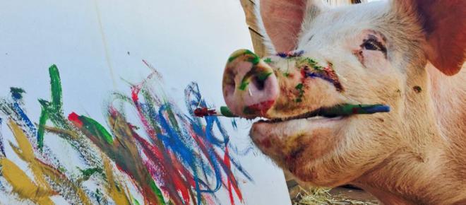Pigcasso, un cochino artista que cobra mil euros
