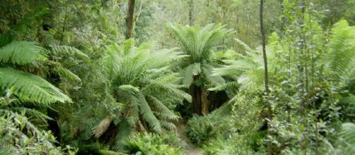 Conozcamos la importancia de los bosques para que no desaparezcan.