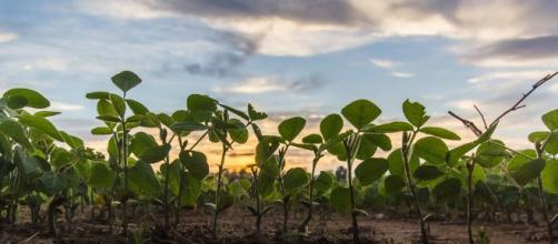El progreso de la agricultura esta en las manos del hombre.