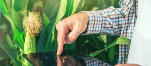 Los casos de éxito de la economía digital en la agricultura.