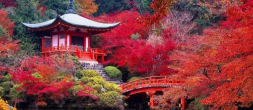 Más extranjeros eligen Kioto como destino de bodas.