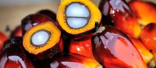 qué el aceite de palma es malo para la salud y debemos evitar ... - localbiomarket.es