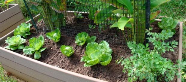 Huertos originales en casa - jardin