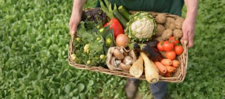 La agricultura orgánica es la mejor alternativa.