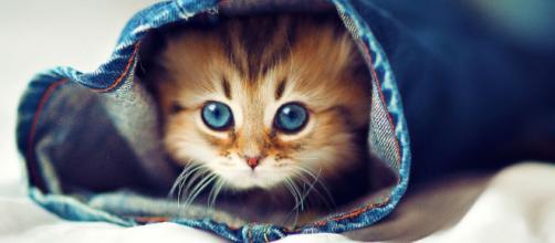 Quieres mejorar tu estado de ánimo? Mira vídeos de gatitos