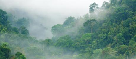Tropical Rainforests and Climatic Energy - Noel Culvert