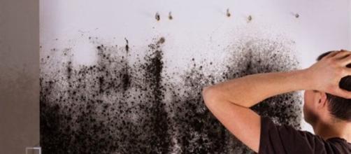 Cosa c'è da fare se notiamo macchie di umidità nell nostro appartamento