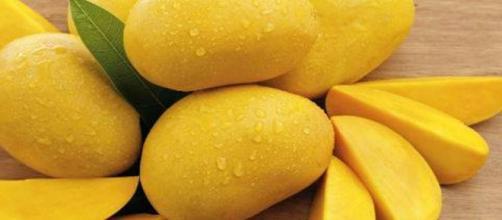 El cultivo de mango es muy delicado.