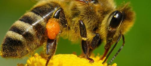 Funciones de las abejas obreras | Guadanatur - guadanatur.es