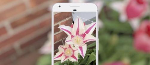 Google Lens estara disponible para ios e android