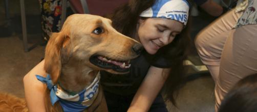 Perros de terapia brindan apoyo emocional a las víctimas del ... - televisa.com