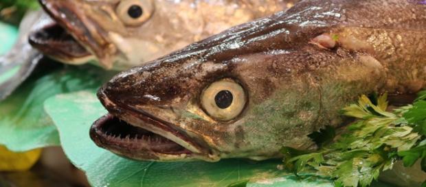 La pesca en el Atlántico sur, ¿piratería o negocio?