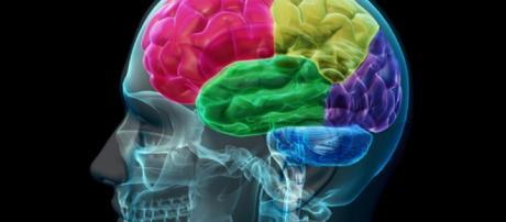 5 descubrimientos psicológicos impresionantes - psicologiaymente.net
