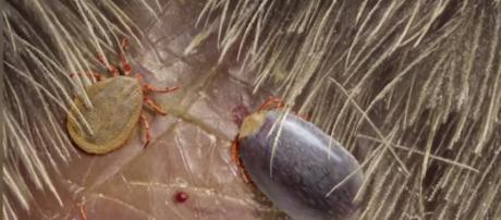 Asian Tcks - image credit - R Sanisidro/Nature Communication via Tomo News US | YouTube