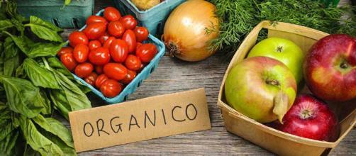 Cómo estos emprendedores pusieron de moda la agricultura orgánica.