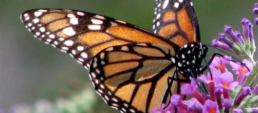 ¿Dónde Viven las Mariposas en invierno?.