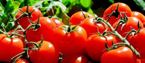 El tomate es de hecho, uno de los super alimentos legendarios utilizados en la lucha contra el cáncer .