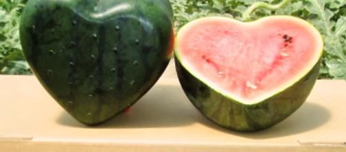 Las cotizadas sandías en forma de cubo o corazón de Japón | Vistazo - vistazo.com