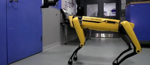 SpoMini, il cane robot dalle sorprendenti prestazioni in azione davanti ad una porta (fonte time.com)
