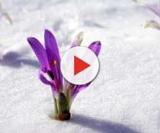 Passato il Burian, prepariamoci ad accogliere la primavera