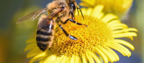 El secreto de la polinización se halla en el cuerpo de las abejas